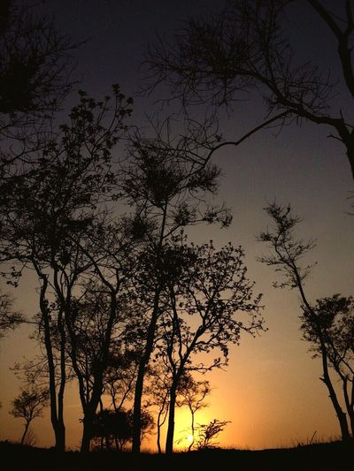 Silhouette trees on landscape against sky at sunset