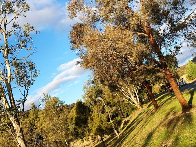 Nature Photography Conder Canberra Hidden Gems  Colour Of Life