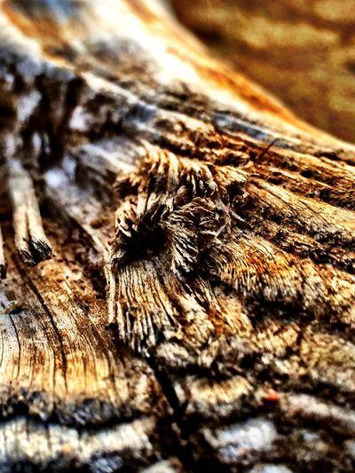 Close-up Macro