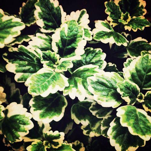Taking Photos Plants Balcony Incienso