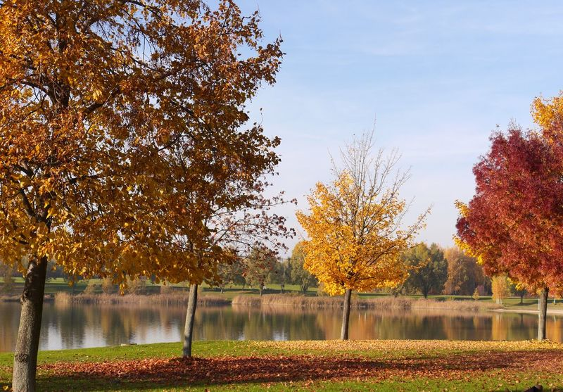 Fall Beauty Indian Summer November Trees Outdoors Eye4photography  With Big Steps To Autumne🍃🍂 Tadaa Community Showcase: November Landscapes With WhiteWall
