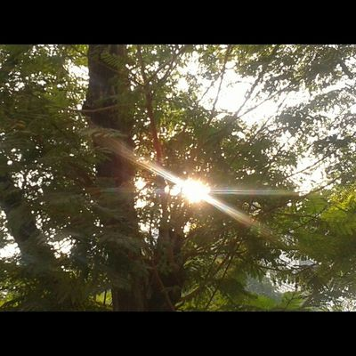 Lovely Sunrays Goodmorning NoEdits  Nature_and_sunsets photographyshoutout3 InstaMumbai sunbeams sunset happy nature 1000thingstodoinmumbai bns_flowers nature