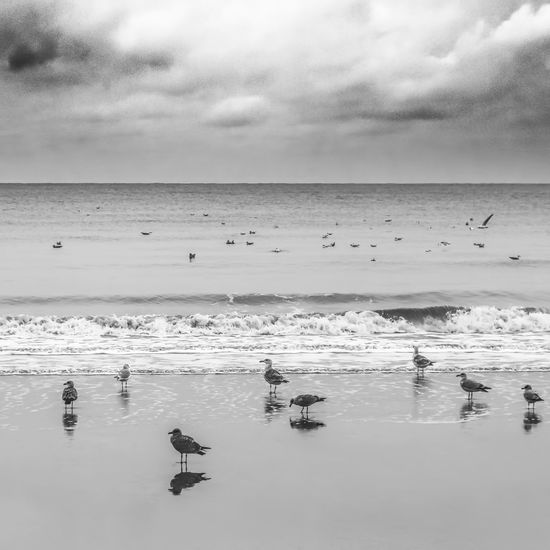 Bridlington Birds Calm Seagulls Tranquility Wave Yorkshire Yorkshire Coast Beach Birds On The Beach Black And White Bnw Clouds And Sky East Yorkshire Minimal Over The Horizon Sand Seascape Shore Shoreline Simple Simplicity Tranquil Scene Water