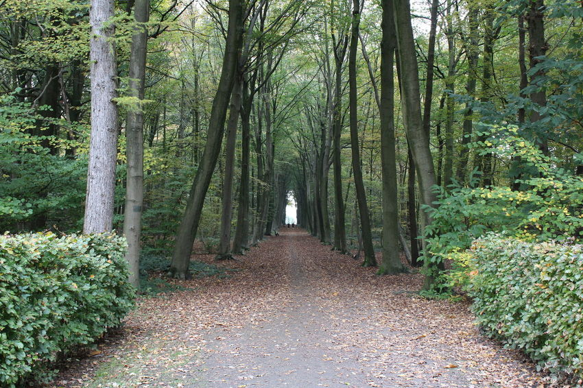 Autumn Belgium Europe Flanders Forest Nature No People Outdoors Tranquility Tree