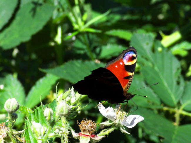 Animal Animal Themes Animal Wildlife Animal Wing Animals In The Wild Beauty In Nature Butterfly Butterfly - Insect Close-up Day Flower Flower Head Flowering Plant Green Color Growth Insect Invertebrate Nature No People One Animal Outdoors Plant Plant Part Pollination
