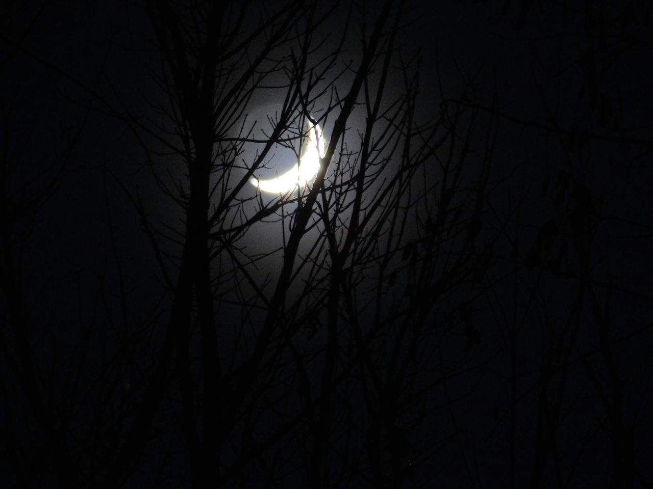 night, bare tree, silhouette, branch, nature, moon, no people, animal themes, outdoors, beauty in nature, tree, bird, one animal, animals in the wild, low angle view, black background, sky, astronomy