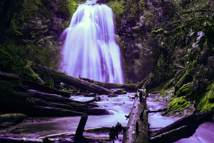 Oregon Beauty PNW PNW At Its Finest Pacific Northwest  Pacific Northwest Beauty Beauty In Nature Day Logs In Water Long Exposure Mossy Tree Motion Nature No People Oregon Explored Oregonexplored Oregonlife Outdoors Pacificnorthwest Pnwlife Scenics Tree Water Waterfall Waterfall Photography Waterfalls