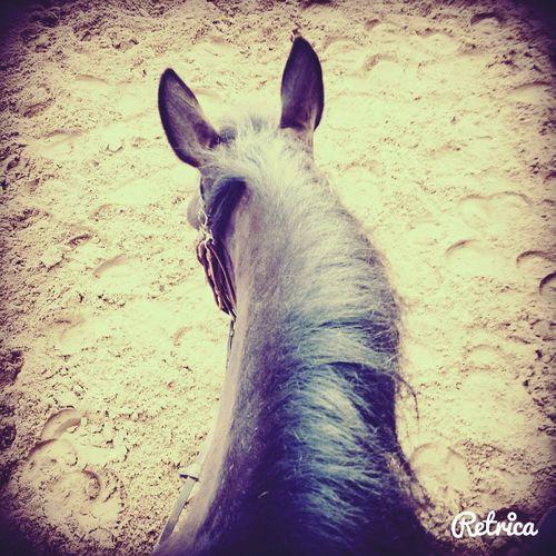 Dream *~* Dreaming My Life Away ♥ L'équitation