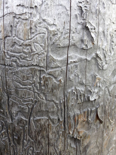 Backgrounds Extreme Close-up Full Frame Gray Color Textured  Wooden