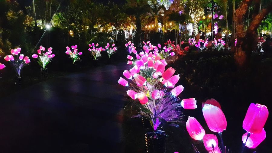 Udonthani Thailand Nightphotography Night Lights Nightlights Flowers_collection Lightflowers Outdoors Branch Lightgarden