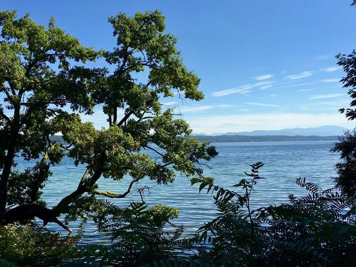 Lake of Starnberg Beauty In Nature Blue Branch Day Foreground Growth Lake Landscape Nature No People Outdoors Scenics Sky Tranquil Scene Tranquility Tree Water