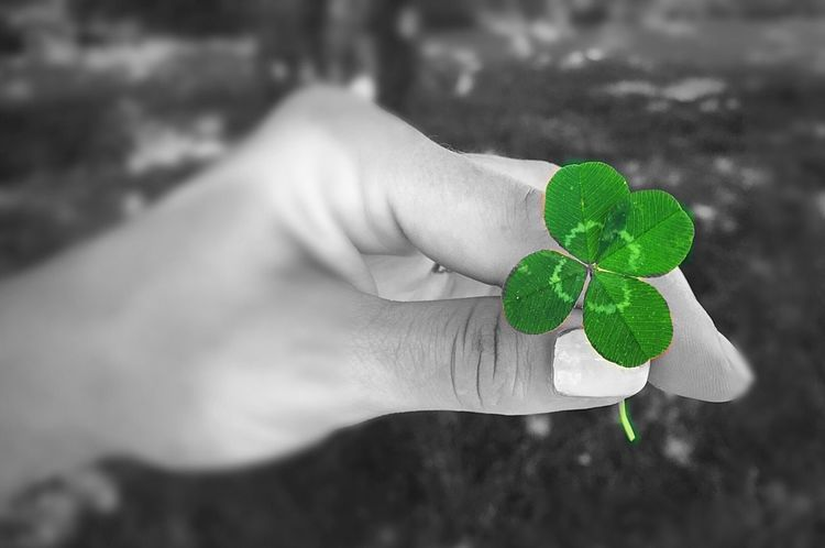 Lucky Wasn't Even Looking Human Hand Four Leaf Clover Hoping For Luck I Love Green Beauty In Nature Beautiful Day Cloverleaf Good Mood :) Spring Is In The Air Luck Of The Irish Lucky Day