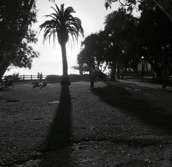 The Street Photographer - 2016 EyeEm Awards Park Santa Monica California Palm Trees Shadow Family Friends