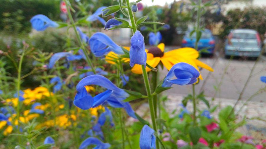 Fleur ♡ Fleurs Flower Violettes Violette Purple Flower Purple Printemps Nature Beauty Nature Beauty In Nature Jaune Jaune🌻 Yellow Flower Yellow Fleur