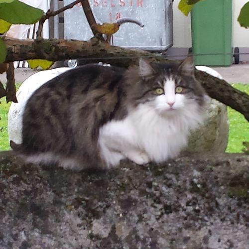 Penelope the LadyCat... Catsofinstagram Catoftheday Cat Lovers Catsoneyeem