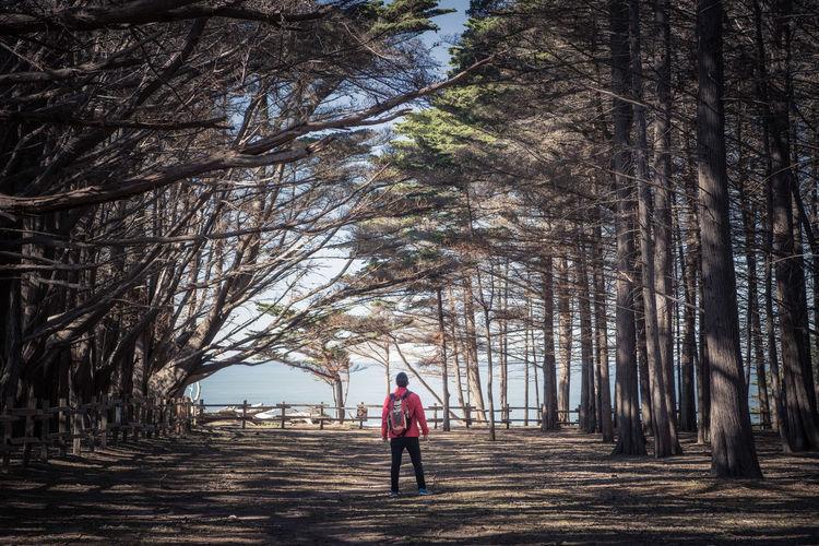 Rear view of woman walking along bare trees