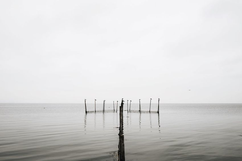 Seagulls Hanging Out on Fish Traps // EyeEm Nature Lover Birds Minimalism Arrow Beach Symmetry Calm Sea Landscapes With WhiteWall Here Belongs To Me
