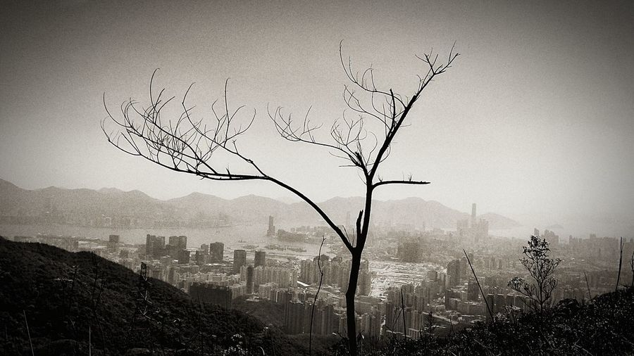Bare tree in city against clear sky