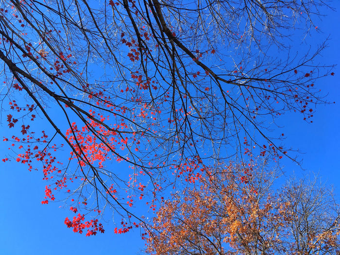 Autumn Backgrounds Beauty In Nature Branch Change Clear Sky Close-up Day Freshness Growth Low Angle View Nature No People Outdoors Scenics Sky Sunlight Tranquility Tree Delicate Overhead View Looking Up Above Overhead Nature Photography