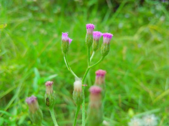Flower Nature Plant Pink Color Growth Purple Uncultivated Outdoors Fragility Close-up Day Beauty In Nature Beauty No People Rural Scene Grass Flower Head Freshness