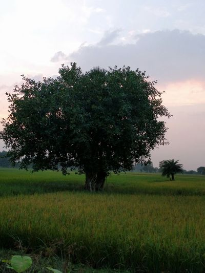 In my village Nature Tree Field Green