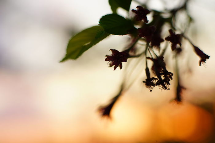 Capture The Moment Fragility Silhouette Sunrise_sunsets_aroundworld Beauty In Nature Nature Macro Flowers Macro Fantasy Uzuki Of The Flower Tranquility Focus On Foreground Fine Art Depth Of Field Selective Focus Fantastic Springtime Macro Fantasy Darkness And Light Full Frame Detail Oldlens Zeiss EyeEm Best Shots 17_05 The Great Outdoors - 2017 EyeEm Awards EyeEmNewHere