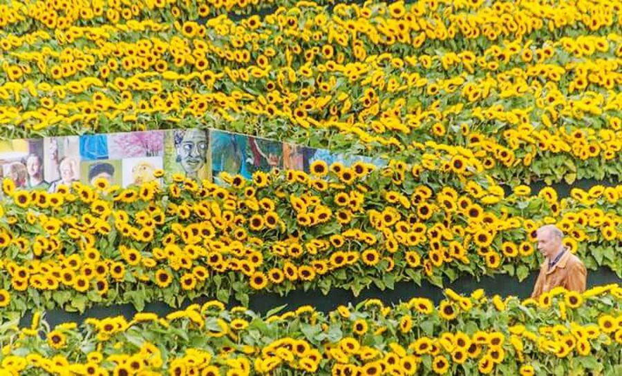 Flower Yellow Outdoors Van Gogh Museum Van Gogh World