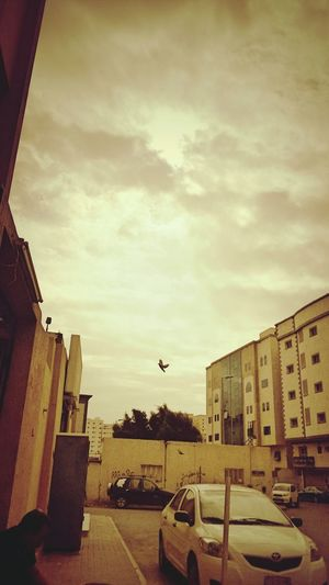 Hanging Out Check This Out Taking Photos Hello World Arab Clouds And Sky Cloudsporn Birds Birds_collection