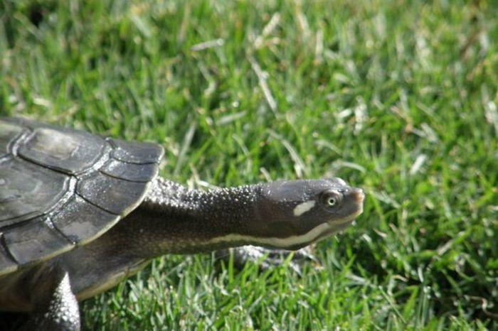 Missy my ninja turtle Pet #turtle Ninjaturtle