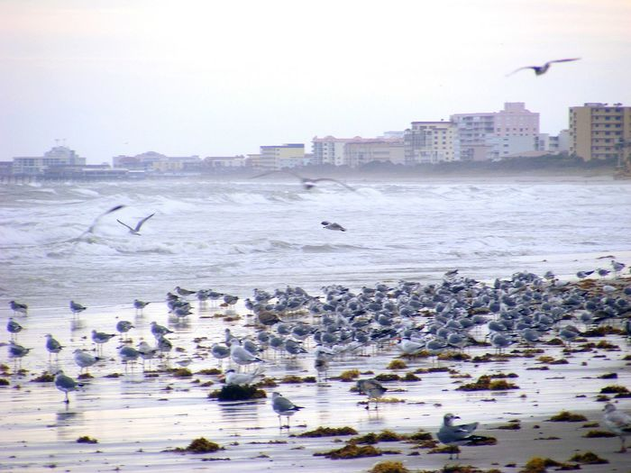 Hanging Out Taking Photos Check This Out Enjoying Life Seagulls Cityscapes City View  Ocean View Cocoa Beach Florida Relaxing Birds Nature Beautiful Nature My Best Photo 2015 Photos By Jeanette Photography In Motion Landscape With Whitewall The Great Outdoors With Adobe My Favorite Photo The Architect- 2016 Eyeem Awards The Great Outdoors - 2016 EyeEm Awards The Essence Of Summer Natures Diversities Lost In The Landscape
