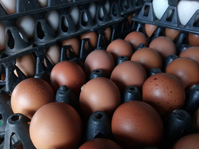 EyeEm Selects Abundance Large Group Of Objects Indoors  Full Frame Food Day Chicken Eggs Egg Carton Close-up