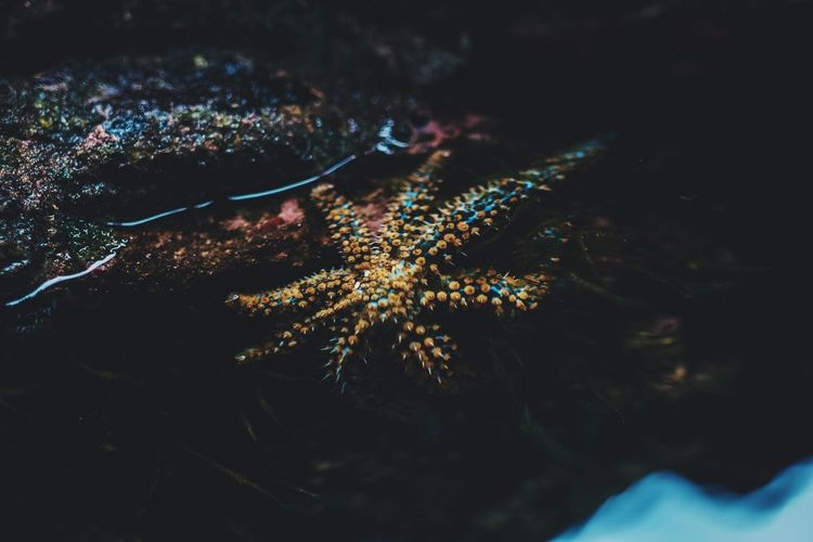 Starfish  Night Plant Illuminated Tree Nature Outdoors No People Close-up Sky Growth Low Angle View Water Beauty In Nature Lighting Equipment Dark Swimming Pool