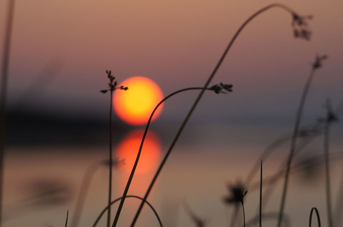 Animal Themes Animals In The Wild Beauty In Nature Bird Close-up Day Focus On Foreground Nature No People Outdoors Silhouette Sky Sun Sunset Sunset #sun #clouds #skylovers #sky #nature #beautifulinnature #naturalbeauty #photography #landscape Sunset Silhouettes Sunset_collection