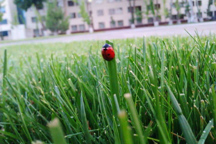 TTPU Turin Polito Ladybug Ladybeetle Ladybird Green Uzbekistan Tashkent Fmphoto