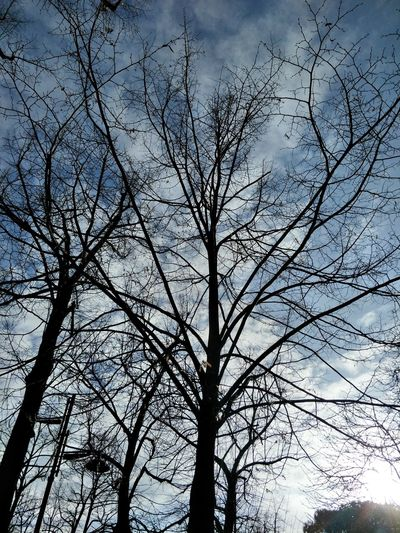 Winter Cold Temperature Trees Gray Weather No Leafs