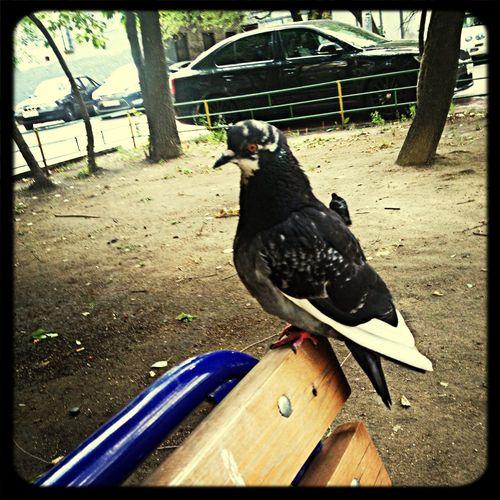 Мой новый крылатый друг :-) развлекал меня, пока я ждала судебные заседания :-) Working