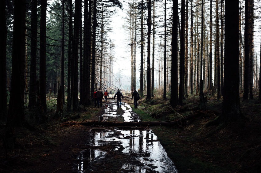 Hiking Walking Around Beauty In Nature Day Forest Full Length Growth Harz Harzmountains Land Men Nature Non-urban Scene Outdoors People Plant Real People Rear View Tree Tree Trunk Trunk Walking Water WoodLand