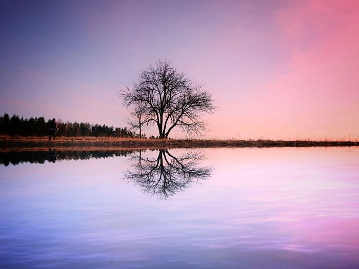 Bare tree by lake against romantic sky at sunset