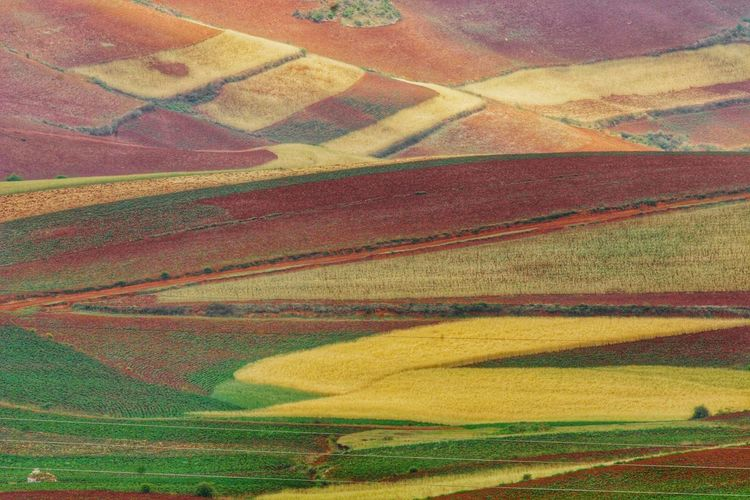 Yunnan China China Landscape Multi Colored Rural Scene Yellow Agriculture Backgrounds Full Frame Field Pattern Cereal Plant Farm Terraced Field Rice Paddy Rice - Cereal Plant Cultivated Land Agricultural Field
