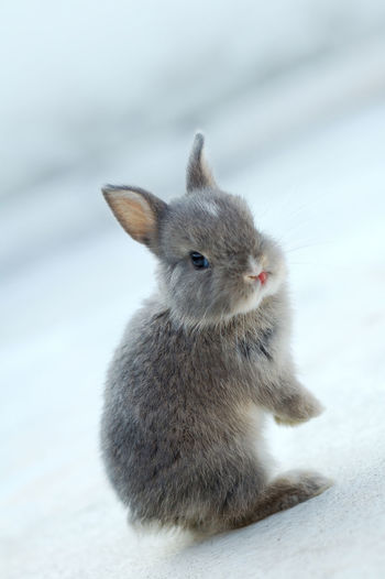 Close-up of a rabbit on snow