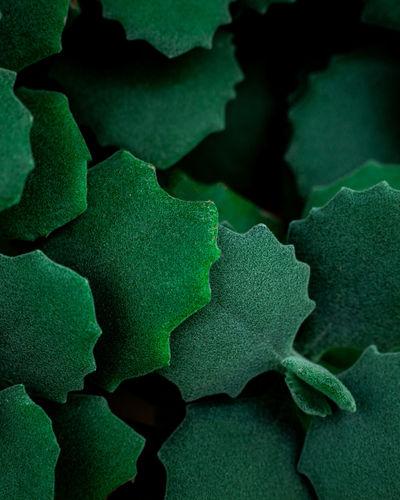 Full frame shot of green plant on table
