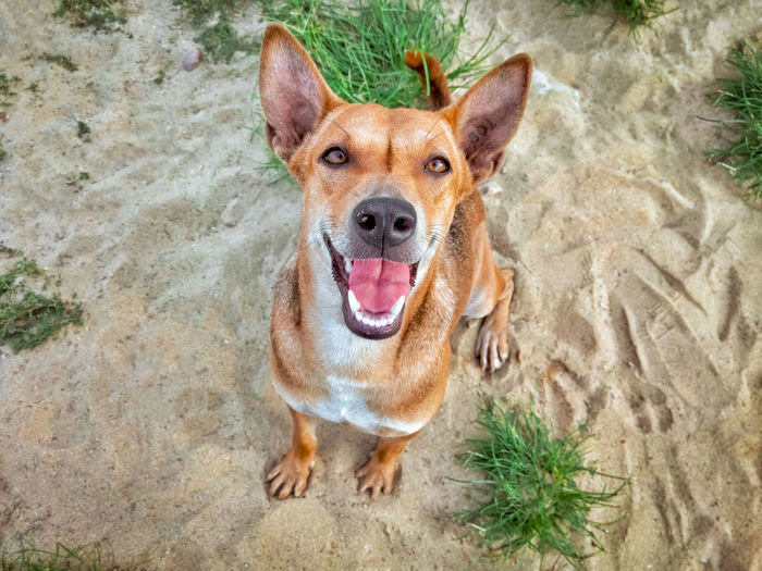 High angle portrait of dog standing outdoors