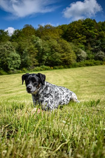 Portrait of dog sitting on field against trees