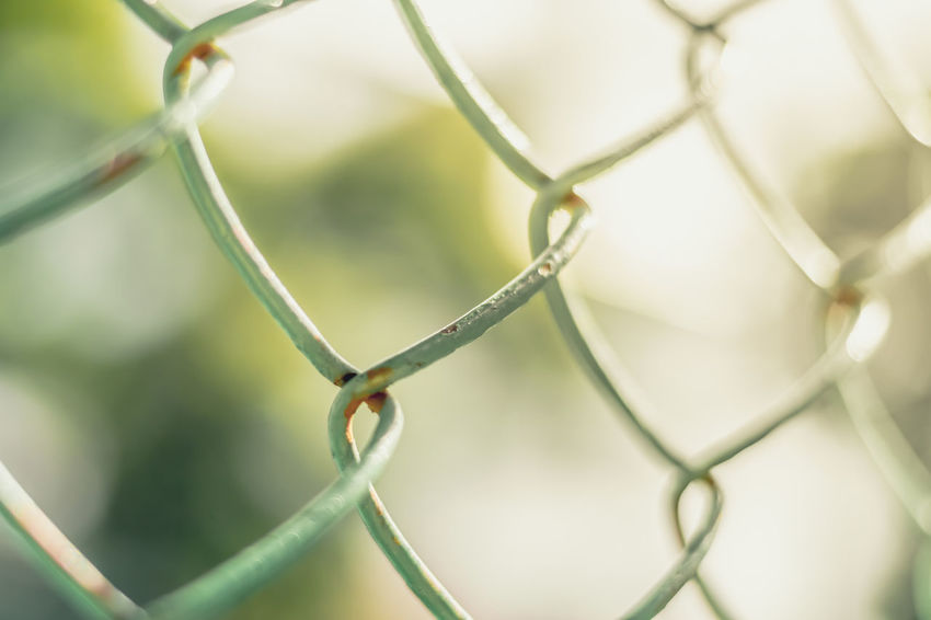 Close up of fence with sunlight and green bokeh background, selective focus. Green Color Light Nature Tree Barbed Wire Blurred Background Bokeh Chainlink Chainlink Fence Close-up Cold Temperature Day Fence Fences Focus On Foreground Full Frame Macro Metal No People Outdoors Pattern Protection Razor Wire Safety Security