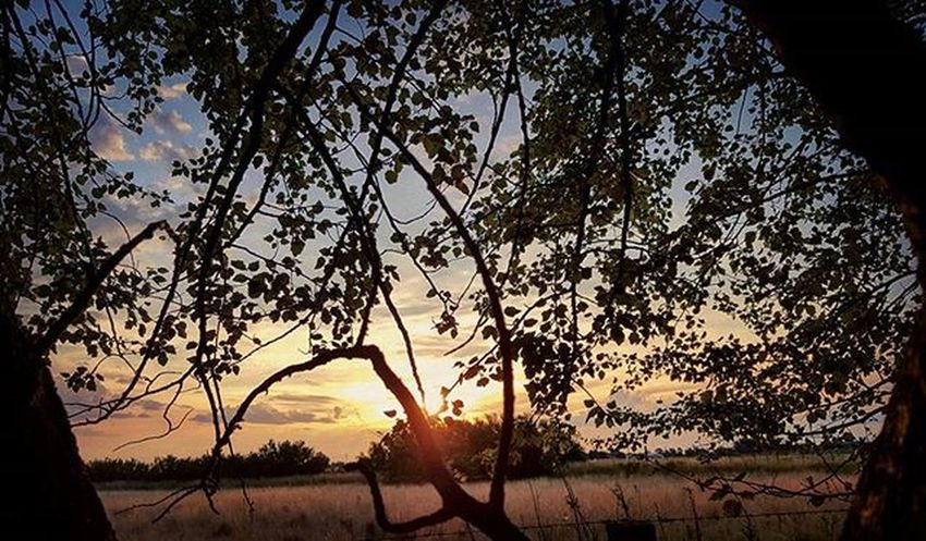 Muy buenas noches a tod@s! Sundown Trees Leaves Shadows Silvestre Wildnature Sunset Sunsetporn Igcapturesclub Igersargentina IGDaily Betterthanpizza Justshoot Instamoment Ignature Picoftheday Bestsunset Worldsunsetchallenge Countryside Campo TresArroyos Summer Summersunset Verano Ig_captures_nature twilight igbuenosaires master_photo argentina_estrella argentinaig