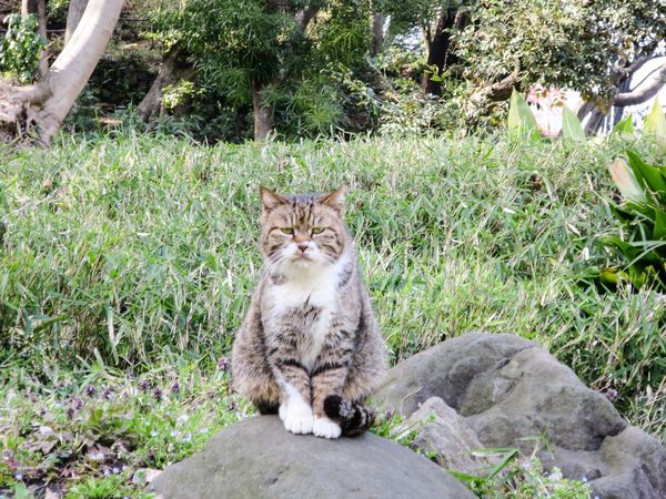 Stray Cat Cat Cat Watching Cat Lovers Garden Animals EyeEm Best Shots at Minatoku 芝公園 in Tokyo Japan