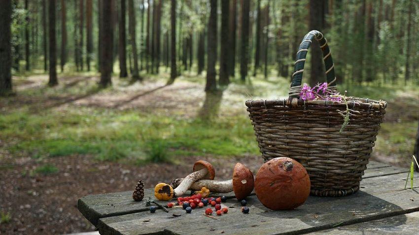 Лес Nature красота Mushrooms Forest