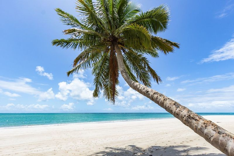 Praia Dos Carneiros Pernambuco Brasil Brazil Beach Beach Photography Praia Nature Landscape Summer Summertime Paradise Paradise Beach Tree Coqueiros Tropical Paradise Landscapes With WhiteWall Showcase April The Essence Of Summer Been There.