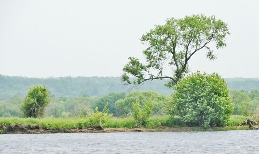 Tree by river against clear sky