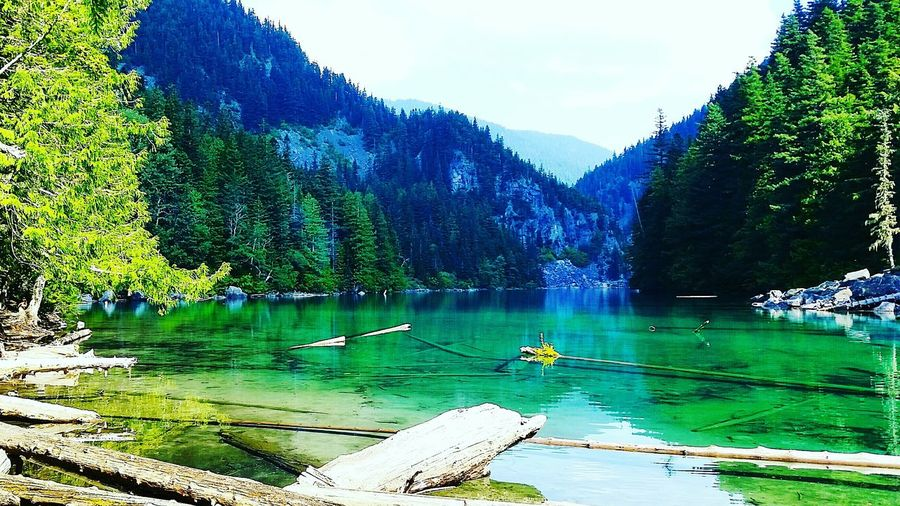 Relaxing Beautiful View Nature Peace And Quiet Summer Lake Beautiful British Columbia Beauty In Nature Canada